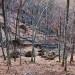 čiščenje gozdov po žledolomu